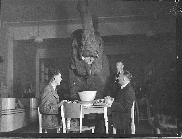 A vintage photo showing two men having tea with an elephant