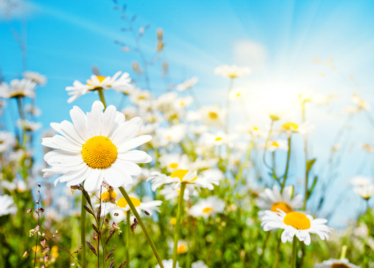 Daisies in the sun image for creative writing post: Capturing Life