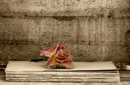 A rose on an old book.